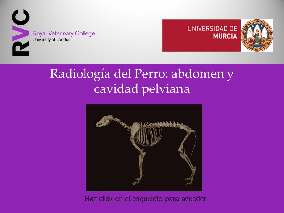 Radiología del Perro: abdomen y cavidad pelviana Haz click en el esqueleto para acceder
