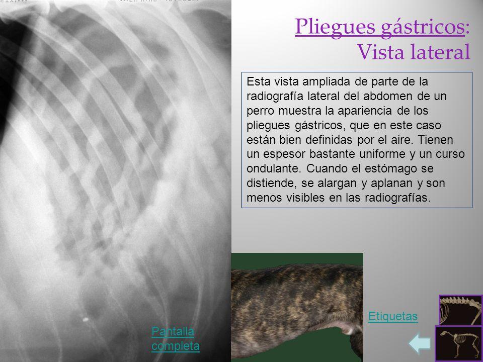 Pliegues gástricos: Vista lateral Pantalla completa Etiquetas Esta vista ampliada de parte de la radiografía lateral del abdomen de un perro muestra l
