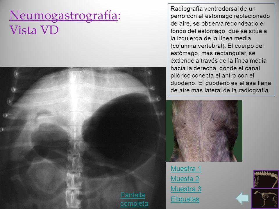 Neumogastrografía: Vista VD Pantalla completa Etiquetas Radiografía ventrodorsal de un perro con el estómago replecionado de aire, se observa redondea