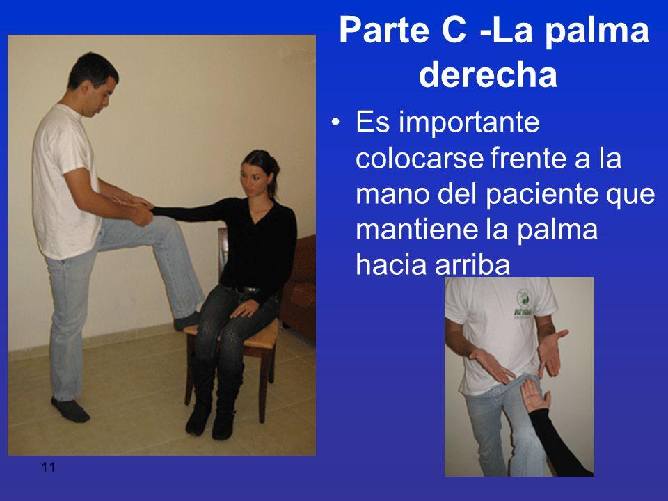11 Parte C -La palma derecha Es importante colocarse frente a la mano del paciente que mantiene la palma hacia arriba