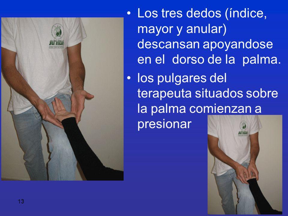 13 Los tres dedos (índice, mayor y anular) descansan apoyandose en el dorso de la palma. los pulgares del terapeuta situados sobre la palma comienzan