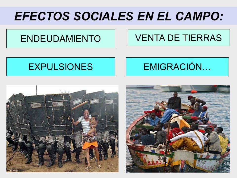 EFECTOS SOCIALES EN EL CAMPO: EMIGRACIÓN…EXPULSIONES ENDEUDAMIENTO VENTA DE TIERRAS