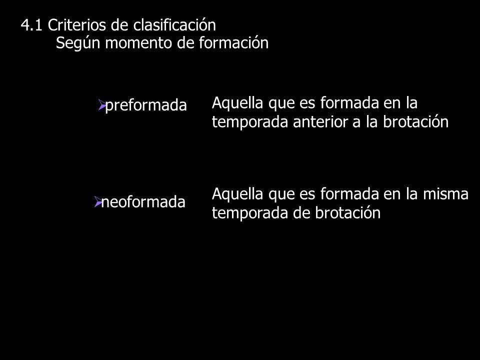 4.1 Criterios de clasificación Según momento de formación neoformada preformada Aquella que es formada en la temporada anterior a la brotación Aquella