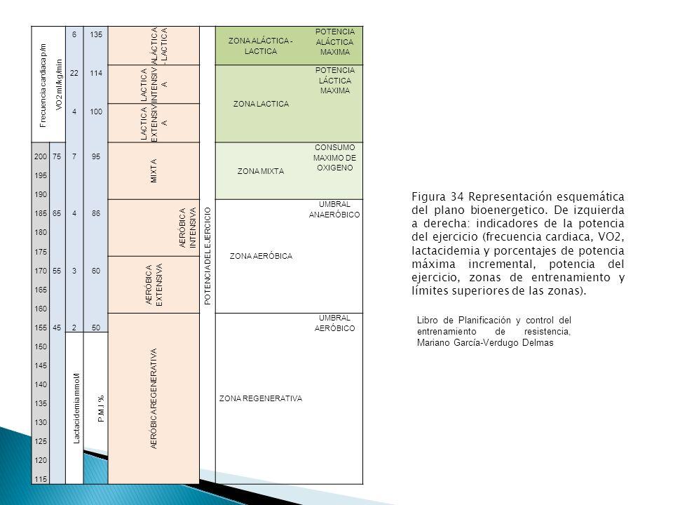 ALÁCTICA - LACTICA EFECTOS: Adaptación Neuromuscular, Adaptación ante intensidades máximas.
