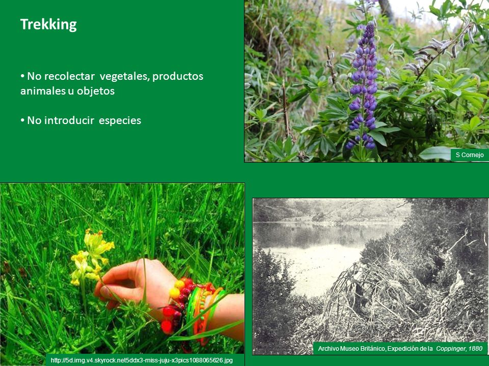 5 Trekking No recolectar vegetales, productos animales u objetos No introducir especies http://5d.img.v4.skyrock.net5ddx3-miss-juju-x3pics1088065626.jpg Archivo Museo Británico, Expedición de la Coppinger, 1880 S Cornejo