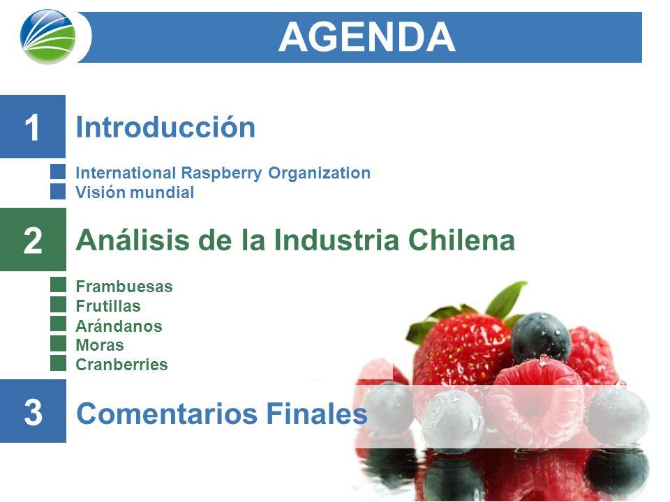 12 Análisis de la Industria Chilena Frambuesas Frutillas Arándanos Moras Cranberries AGENDA 2 Comentarios Finales 3 Introducción International Raspberry Organization Visión mundial 1
