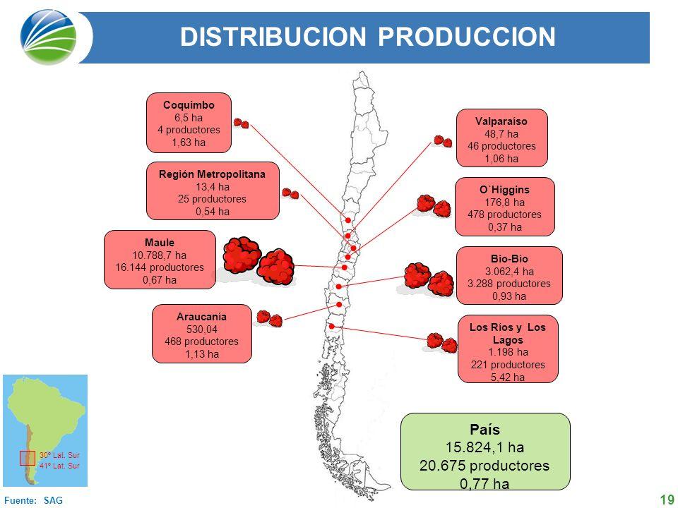 19 Coquimbo 6,5 ha 4 productores 1,63 ha Valparaíso 48,7 ha 46 productores 1,06 ha Región Metropolitana 13,4 ha 25 productores 0,54 ha O`Higgins 176,8 ha 478 productores 0,37 ha Maule 10.788,7 ha 16.144 productores 0,67 ha Bio-Bío 3.062,4 ha 3.288 productores 0,93 ha Araucanía 530,04 468 productores 1,13 ha Los Ríos y Los Lagos 1.198 ha 221 productores 5,42 ha Fuente: SAG País 15.824,1 ha 20.675 productores 0,77 ha 30º Lat.