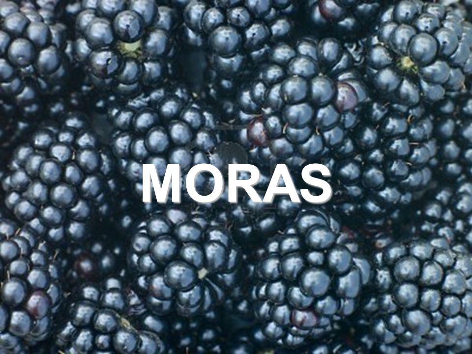 37 MORAS