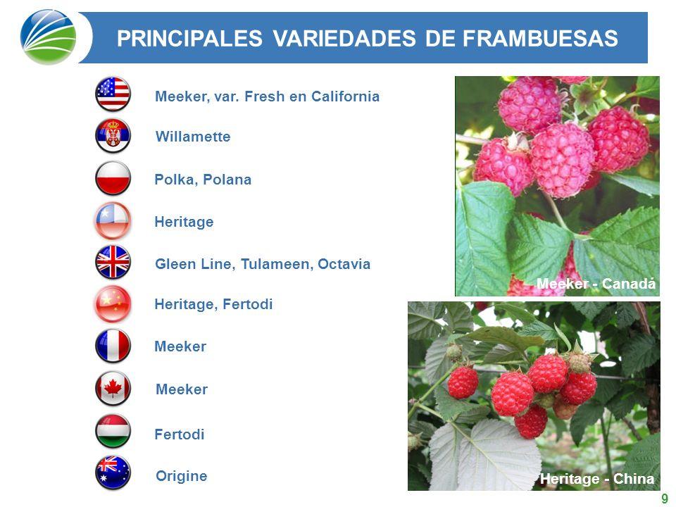 10 País 2009 (ton) 2010 (ton) Superficie (ha) Variedades EE.UU.75.00073.2009.000Meeker, var, Fresh en California Serbia65.00070.00015.500Willamette Polonia60.00065.00012.000Polka, Polana Chile42.00060.00011.000Heritage Reino Unido16.00013.0001.800Gleen Line, Tulameen, Octavia China8.00013.0004.300Heritage, Fertodi Francia8.00010.0001.400Meeker Canadá11.9009.8001.500Meeker Hungría2.5002.000400Fertodi Australia1.6002.000400Origine Otros47.00040.0006.000 TOTAL337.000357.00063.300 PRODUCCION MUNDIAL DE FRAMBUESAS