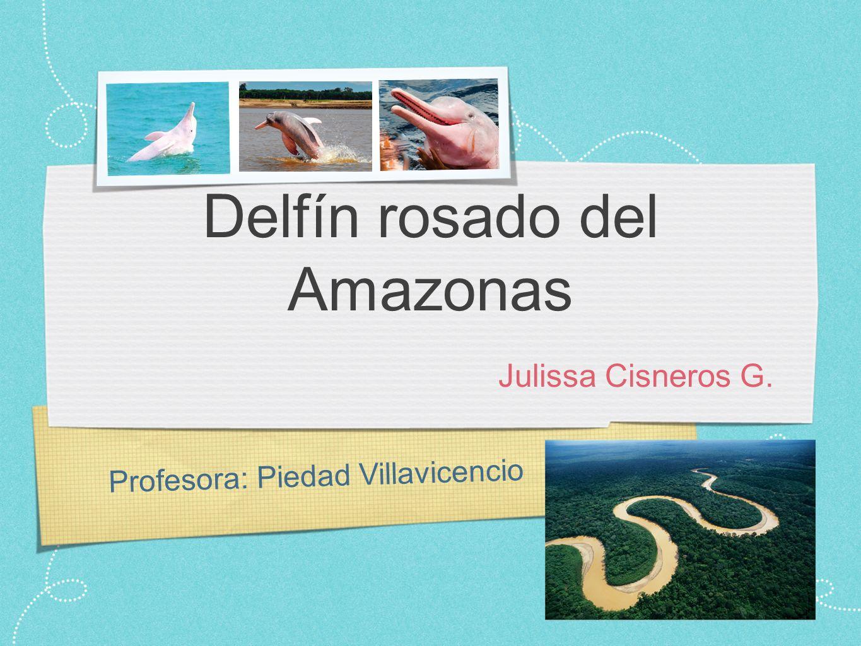Profesora: Piedad Villavicencio Delfín rosado del Amazonas Julissa Cisneros G.