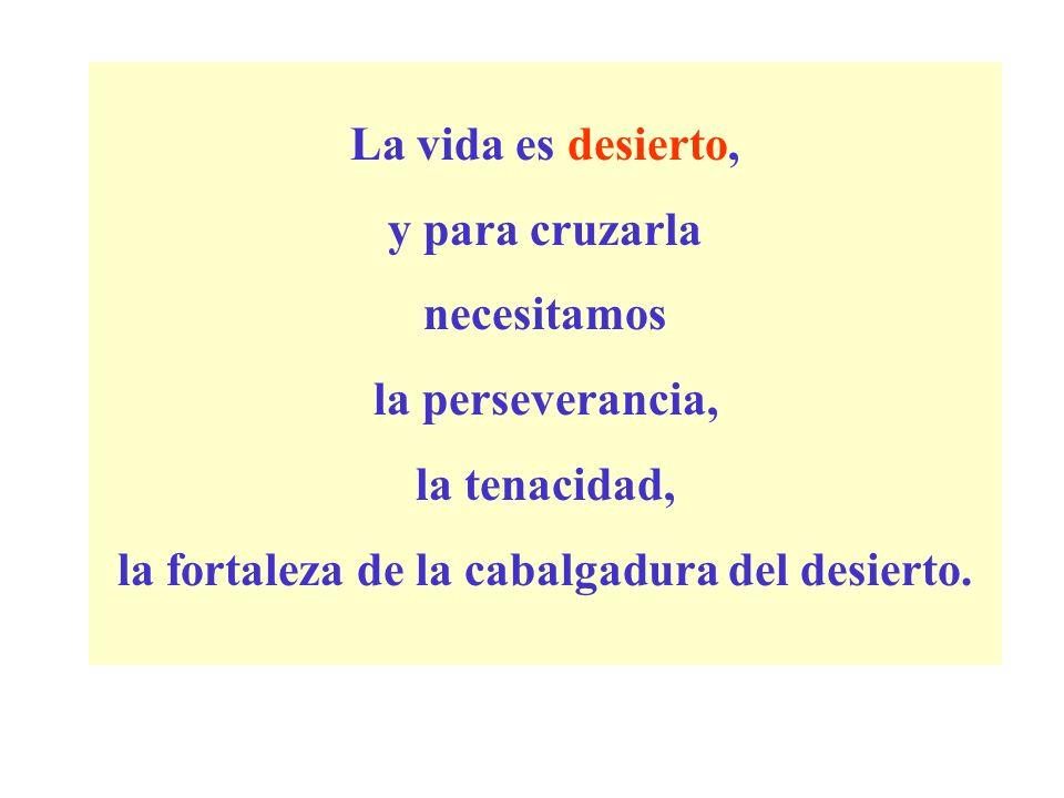 La vida es desierto, y para cruzarla necesitamos la perseverancia, la tenacidad, la fortaleza de la cabalgadura del desierto.