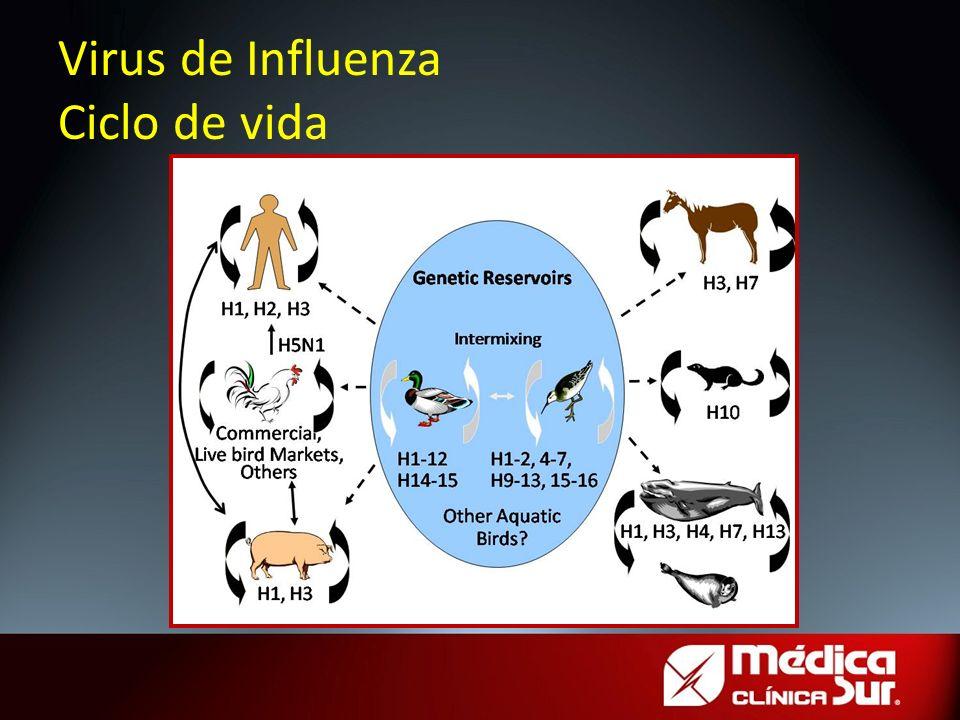 Virus de Influenza Ciclo de vida