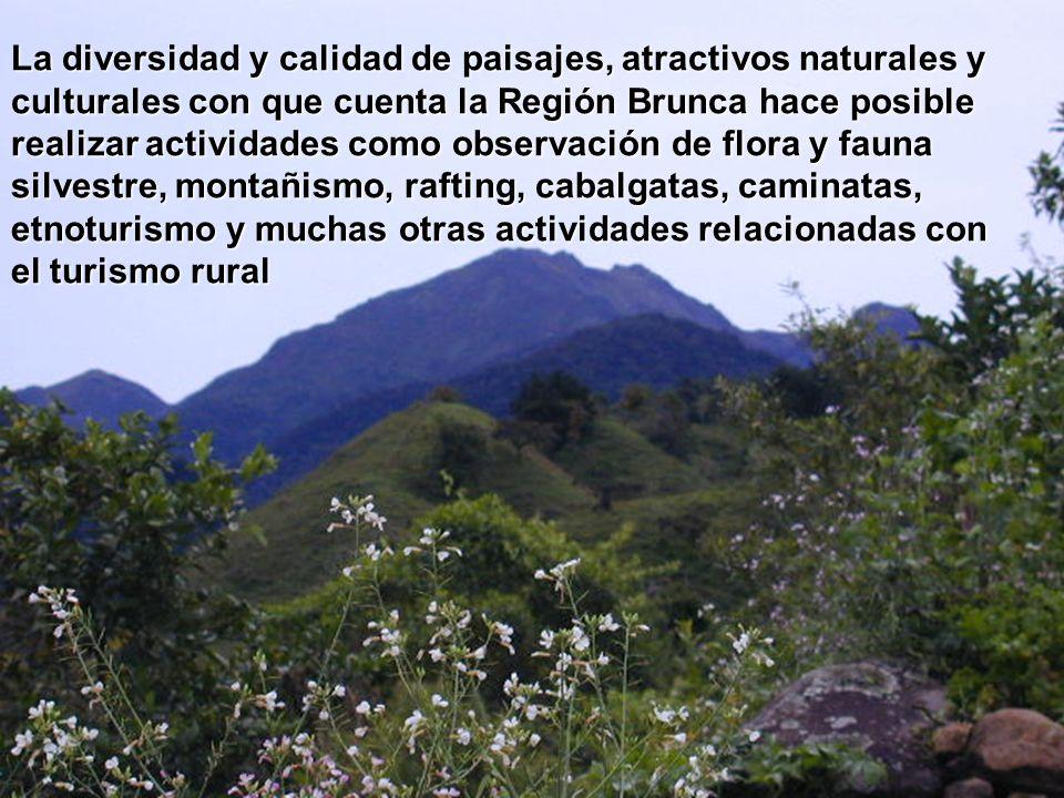 La diversidad y calidad de paisajes, atractivos naturales y culturales con que cuenta la Región Brunca hace posible realizar actividades como observac
