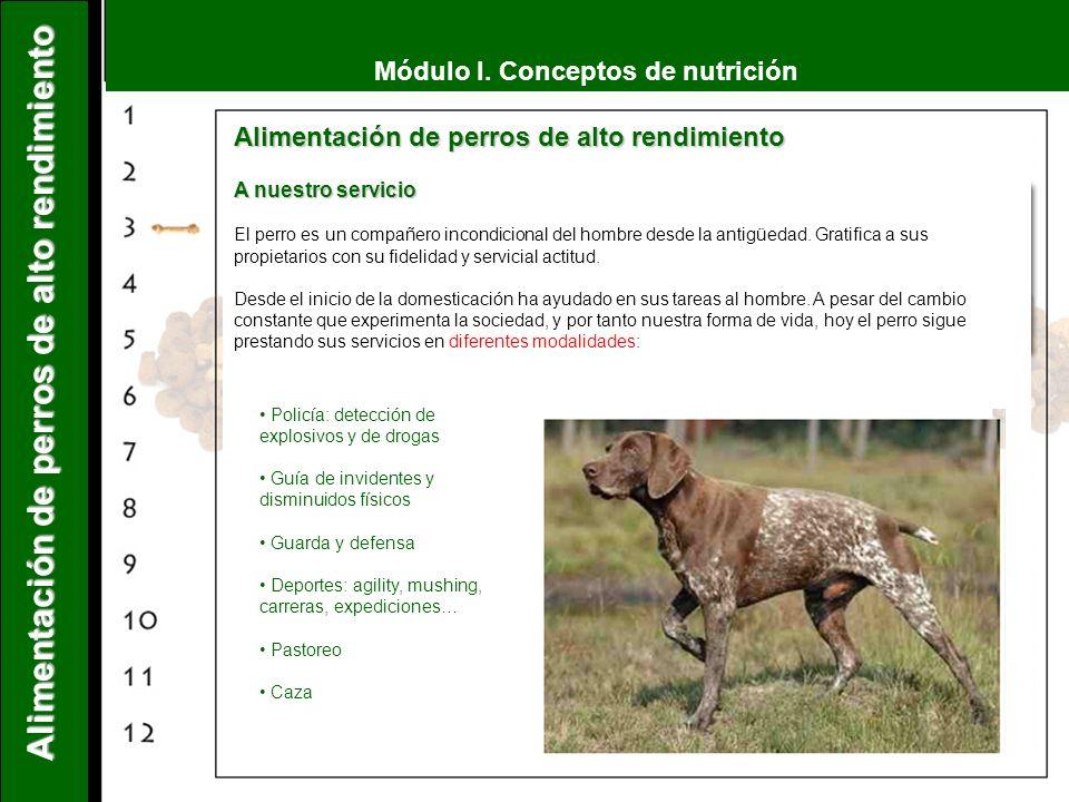 Módulo I. Conceptos de nutrición Alimentación de perros de alto rendimiento A nuestro servicio El perro es un compañero incondicional del hombre desde