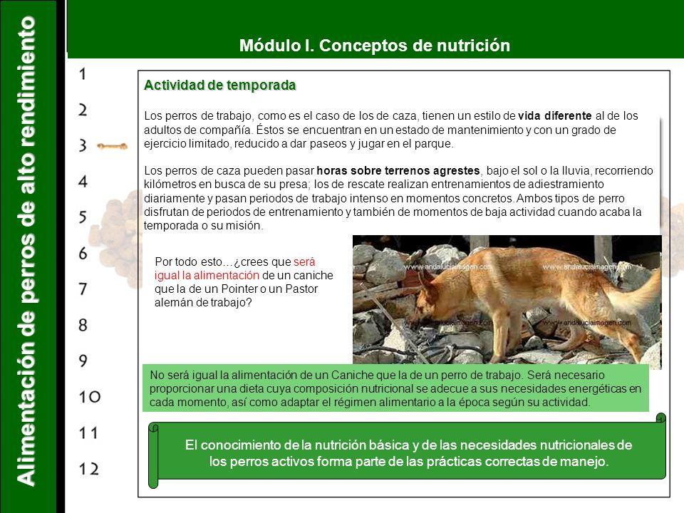 Módulo I. Conceptos de nutrición Alimentación de perros de alto rendimiento Actividad de temporada Los perros de trabajo, como es el caso de los de ca