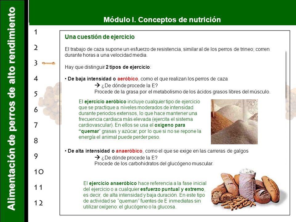 Módulo I. Conceptos de nutrición Alimentación de perros de alto rendimiento Una cuestión de ejercicio El trabajo de caza supone un esfuerzo de resiste