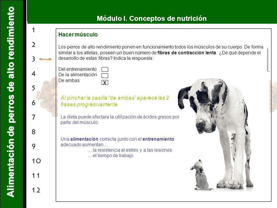 Módulo I. Conceptos de nutrición Alimentación de perros de alto rendimiento Hacer músculo Los perros de alto rendimiento ponen en funcionamiento todos