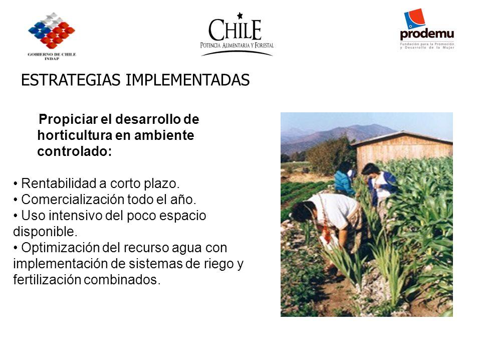 ESTRATEGIAS IMPLEMENTADAS Propiciar el desarrollo de horticultura en ambiente controlado: Rentabilidad a corto plazo. Comercialización todo el año. Us