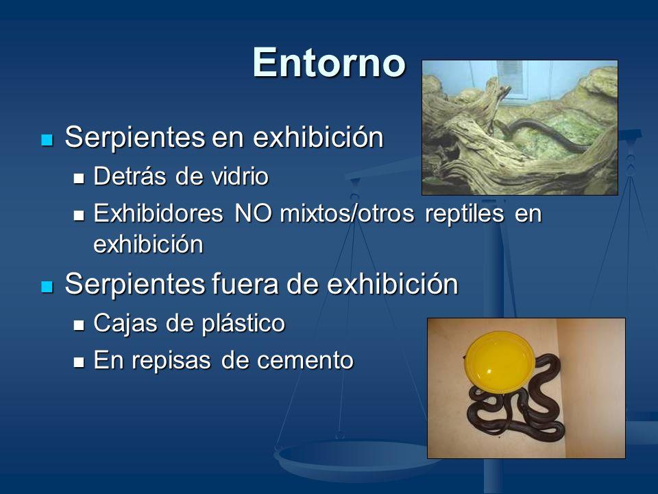 Casos Enero 30, 2003 Enero 30, 2003 Elaphe obsolete quadrivittata Elaphe obsolete quadrivittata Serpiente ratonera amarilla Serpiente ratonera amarill