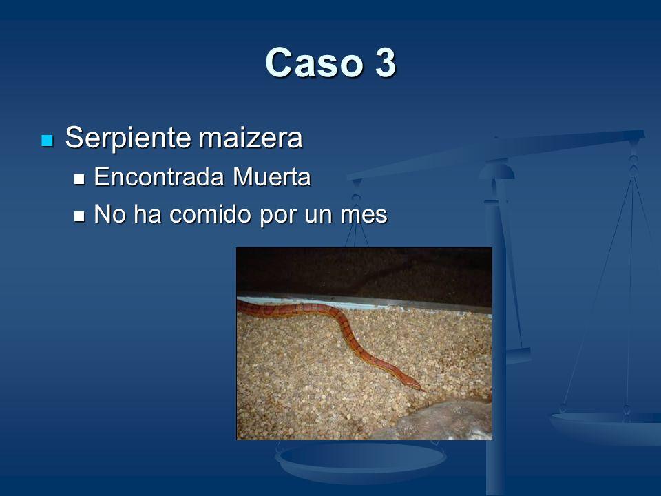 Identificación de Parásitos Helmintos Gástricos Kalicephalus Común, pero se considera hallazgo incidental en serpientes