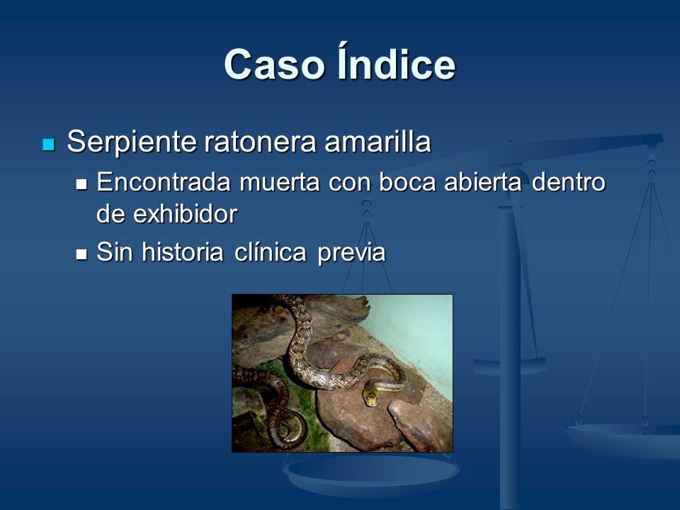 Dieta La mayoría de las La mayoría de las serpientes serpientes Ratones Ratones Los constrictores mayores Los constrictores mayores Conejos Conejos Cu
