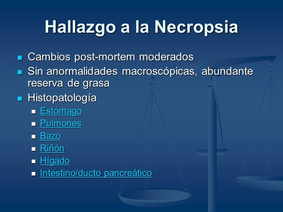 Hígado Congestión hepática moderada Congestión hepática moderada Leucostasis heterofílica Leucostasis heterofílica Estasis biliar moderada Estasis biliar moderada