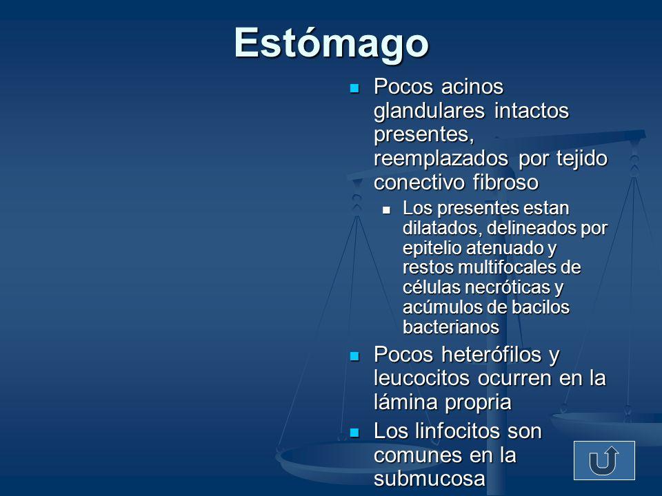 Pulmón Congestión Moderada Congestión Moderada Leucocitosis heterofílica Leucocitosis heterofílica