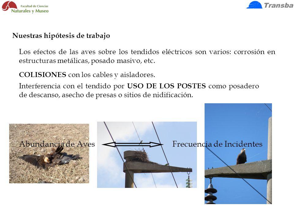Los efectos de las aves sobre los tendidos eléctricos son varios: corrosión en estructuras metálicas, posado masivo, etc. COLISIONES con los cables y