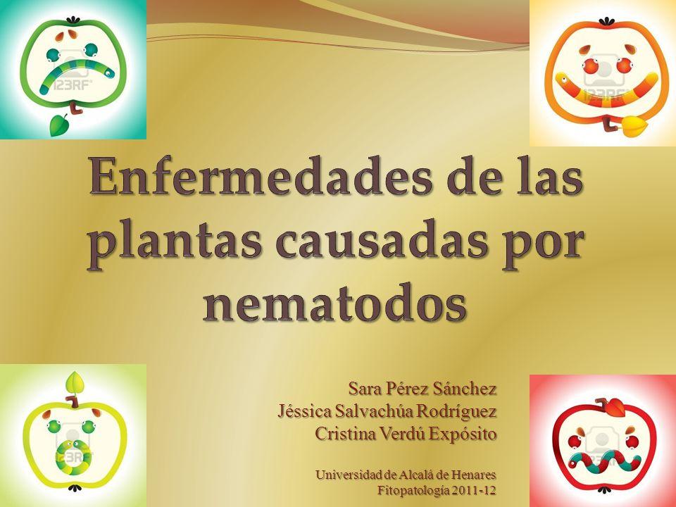 Sara Pérez Sánchez Jéssica Salvachúa Rodríguez Cristina Verdú Expósito Universidad de Alcalá de Henares Fitopatología 2011-12