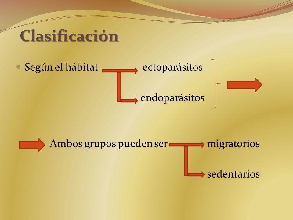 Según el hábitat ectoparásitos endoparásitos Ambos grupos pueden ser migratorios sedentarios Clasificación