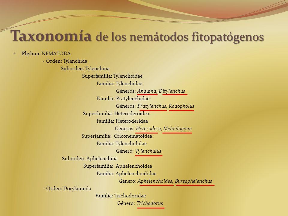 Taxonomía de los nemátodos fitopatógenos Phylum: NEMATODA - Orden: Tylenchida Suborden: Tylenchina Superfamilia: Tylenchoidae Familia: Tylenchidae Gén