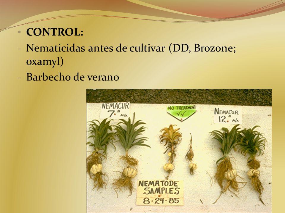 CONTROL: - Nematicidas antes de cultivar (DD, Brozone; oxamyl) - Barbecho de verano