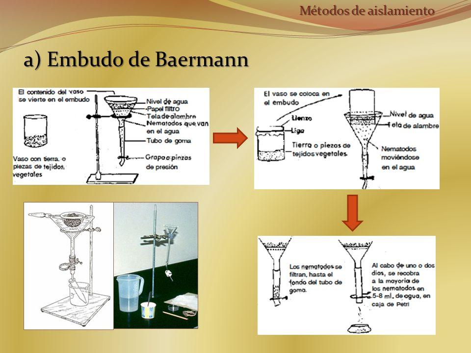 a) Embudo de Baermann Métodos de aislamiento