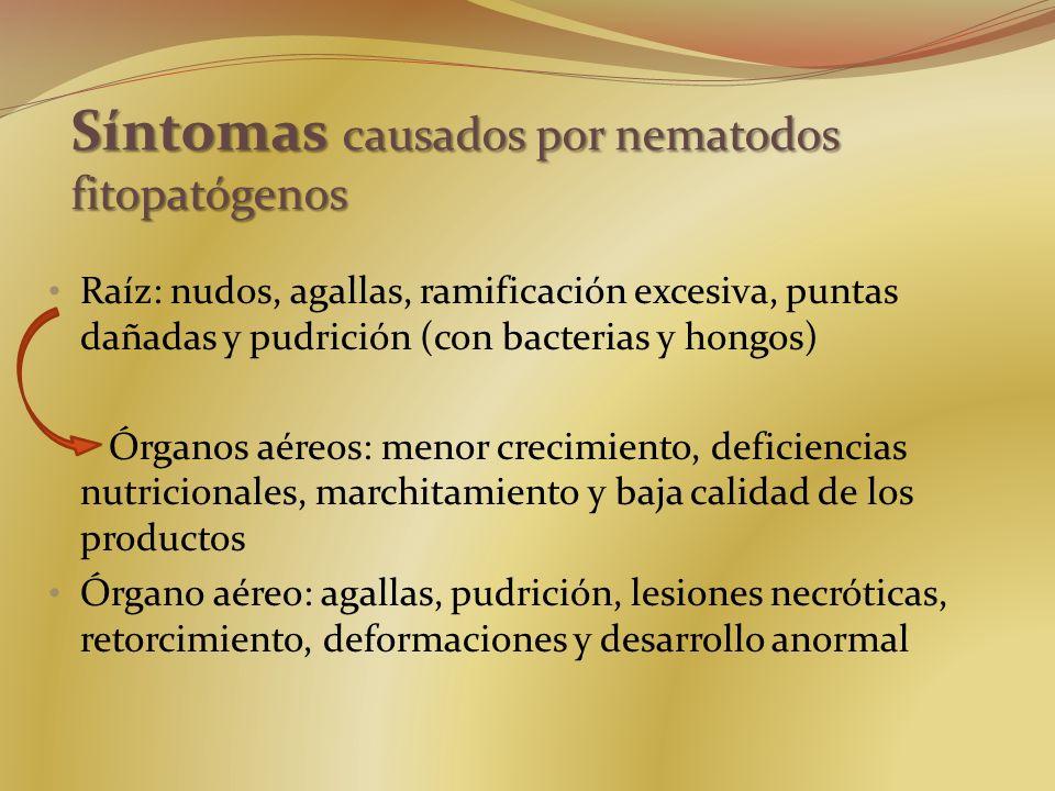 Raíz: nudos, agallas, ramificación excesiva, puntas dañadas y pudrición (con bacterias y hongos) Órganos aéreos: menor crecimiento, deficiencias nutri