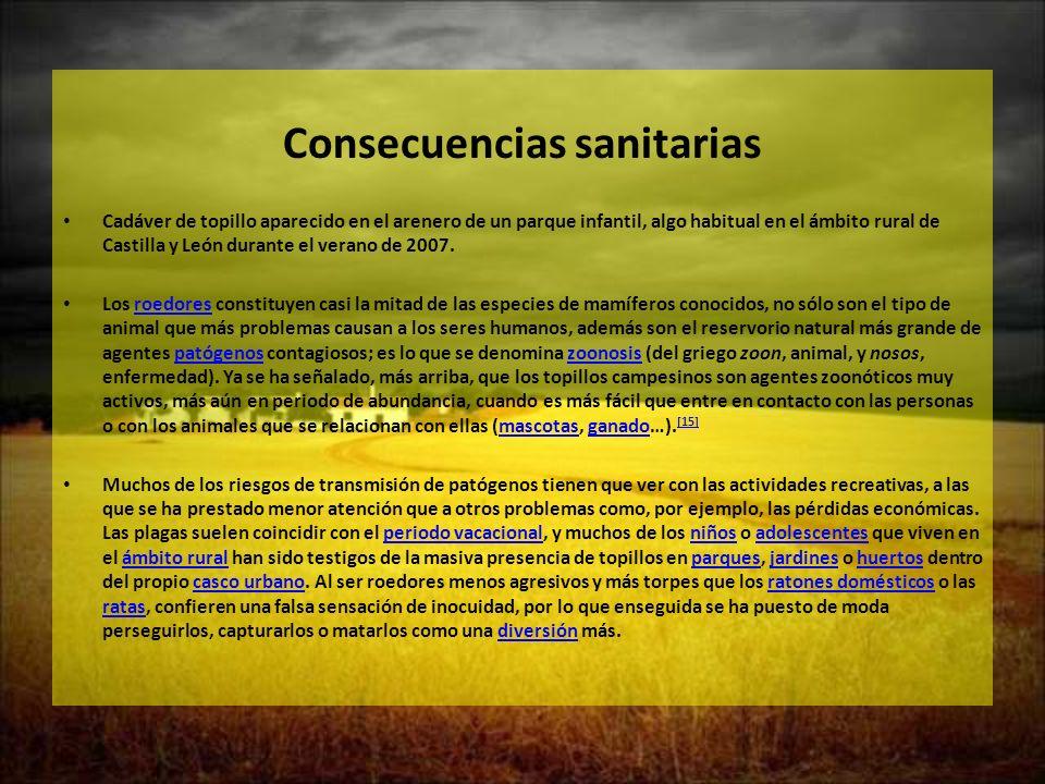 Consecuencias sanitarias Cadáver de topillo aparecido en el arenero de un parque infantil, algo habitual en el ámbito rural de Castilla y León durante