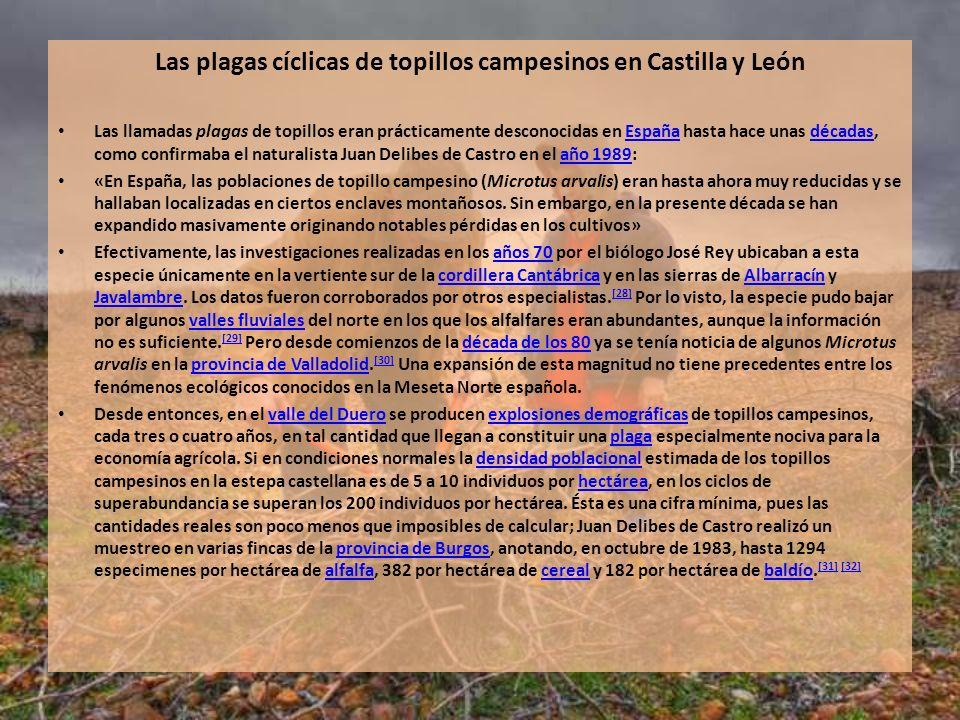 Las plagas cíclicas de topillos campesinos en Castilla y León Las llamadas plagas de topillos eran prácticamente desconocidas en España hasta hace una