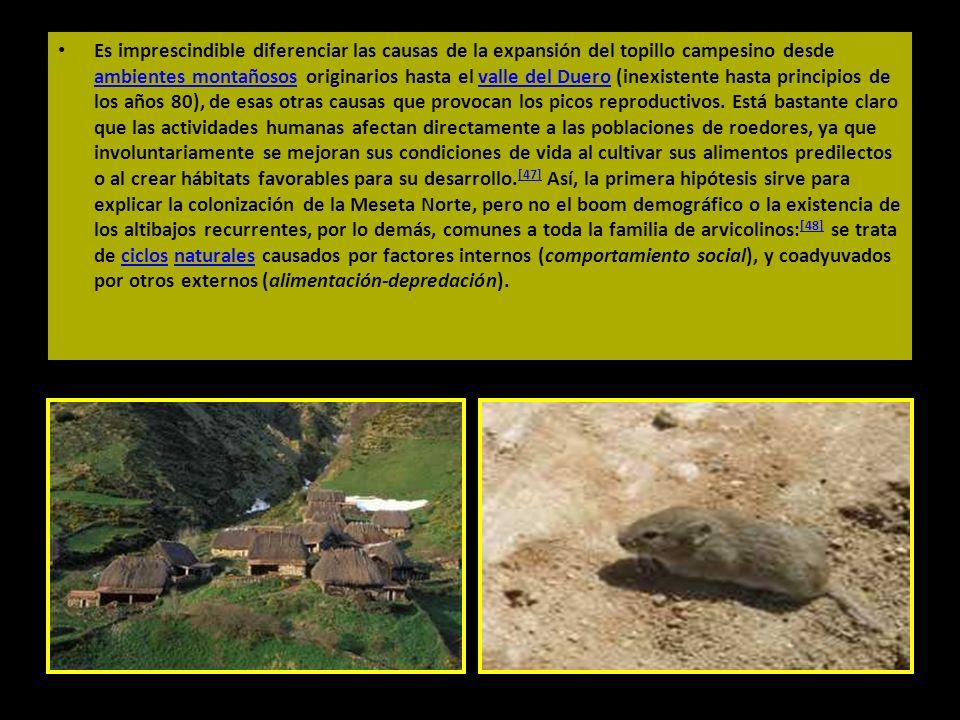 Es imprescindible diferenciar las causas de la expansión del topillo campesino desde ambientes montañosos originarios hasta el valle del Duero (inexis