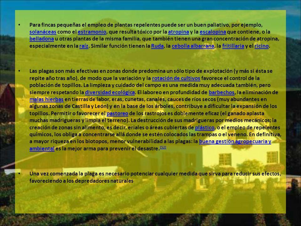 Para fincas pequeñas el empleo de plantas repelentes puede ser un buen paliativo, por ejemplo, solanáceas como el estramonio, que resulta tóxico por l