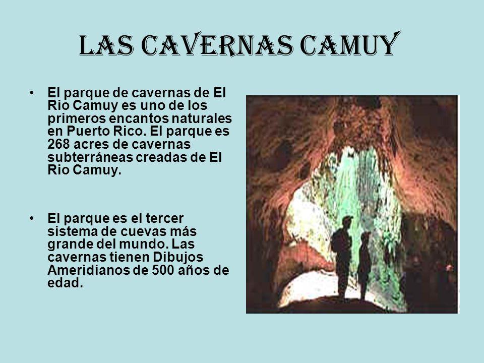Las Cavernas Camuy El parque de cavernas de El Rio Camuy es uno de los primeros encantos naturales en Puerto Rico. El parque es 268 acres de cavernas