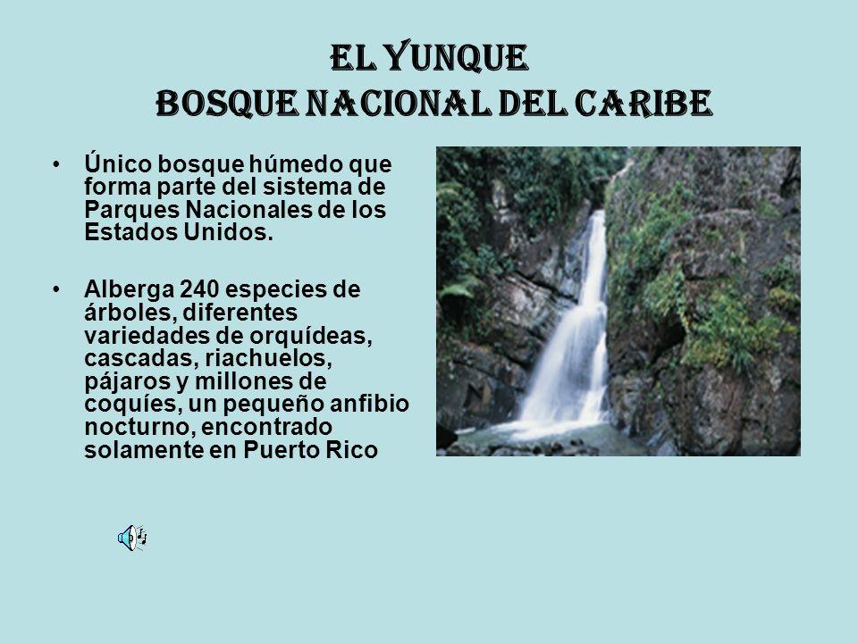 El Yunque Bosque Nacional del Caribe Único bosque húmedo que forma parte del sistema de Parques Nacionales de los Estados Unidos. Alberga 240 especies