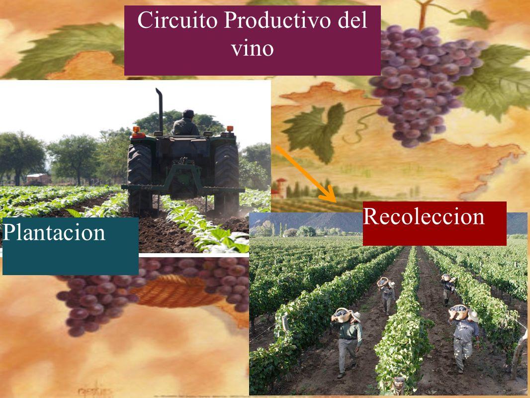 Plantaciones de: olivos, nogal, legumbres, hortalizas y la vid. VID OLIVOS cuarzo mica cobre granito