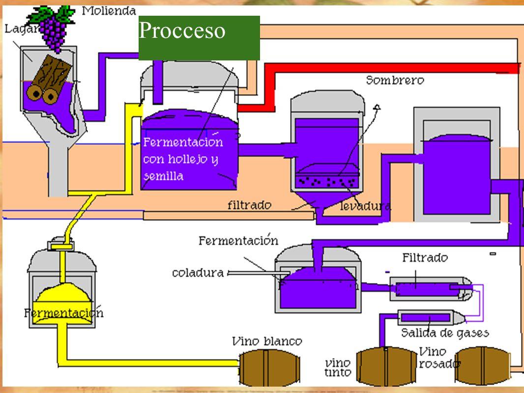 Circuito Productivo del vino Plantacion Recoleccion