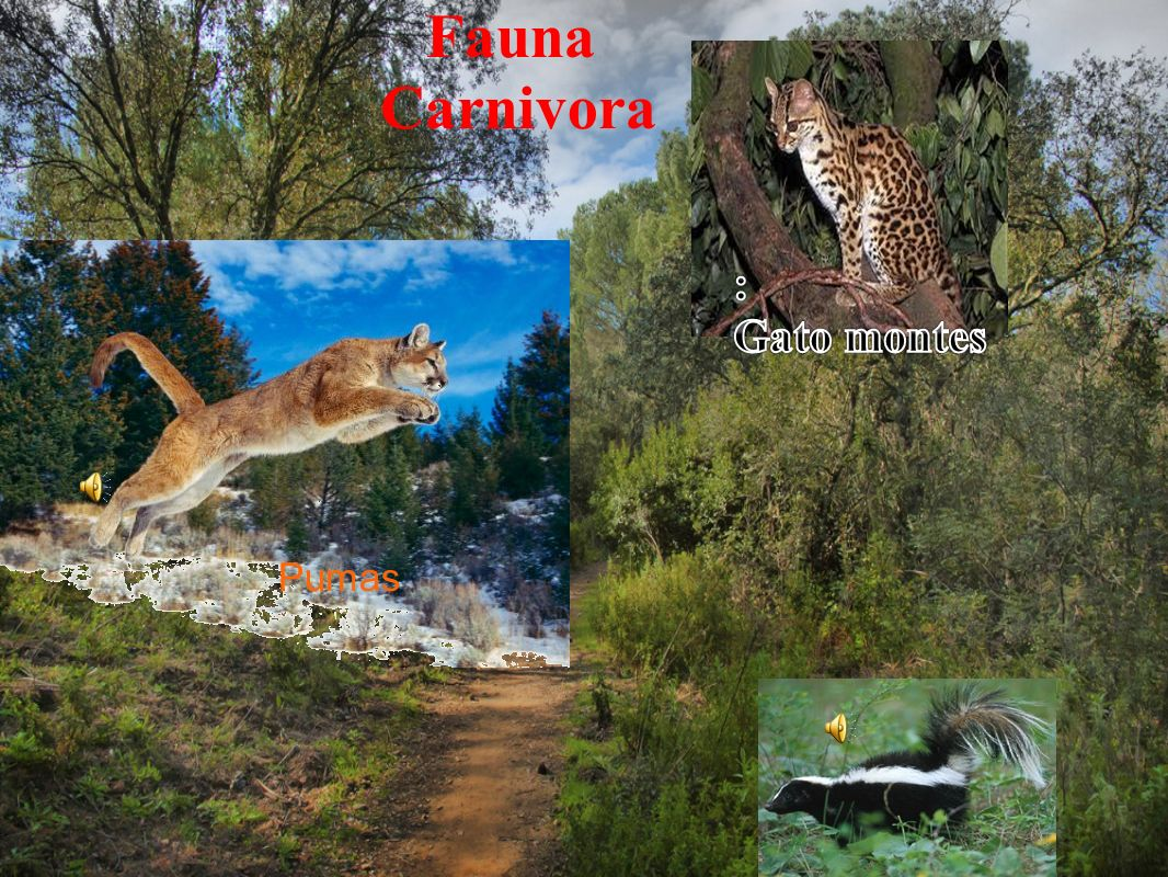 Fauna La fauna es mas diversa que la flora. Entre estos animales hay........ LA FAUNA