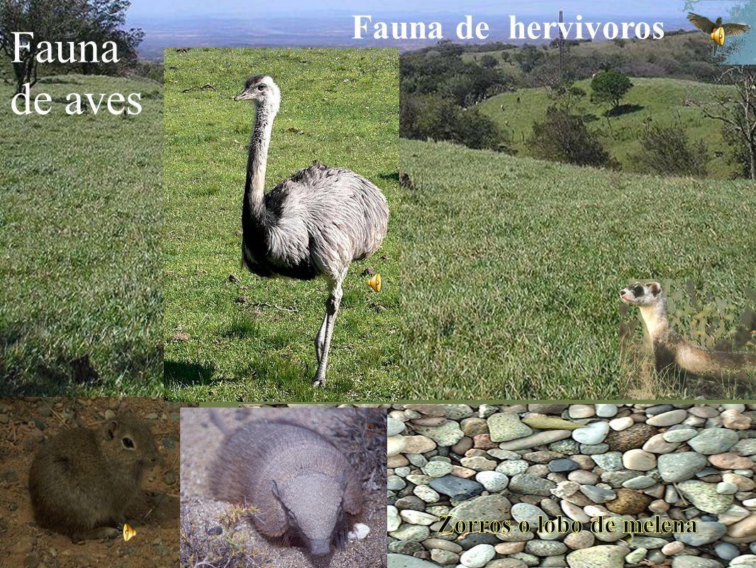 Pumas Fauna Carnivora