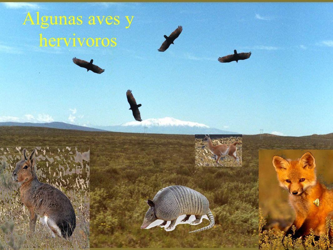 Fauna de hervivoros Fauna de aves