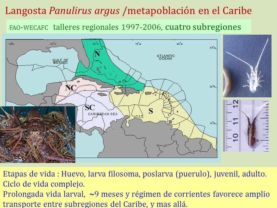 Langosta Panulirus argus /metapoblación en el Caribe FAO - WECAFC talleres regionales 1997-2006, cuatro subregiones Etapas de vida : Huevo, larva filo