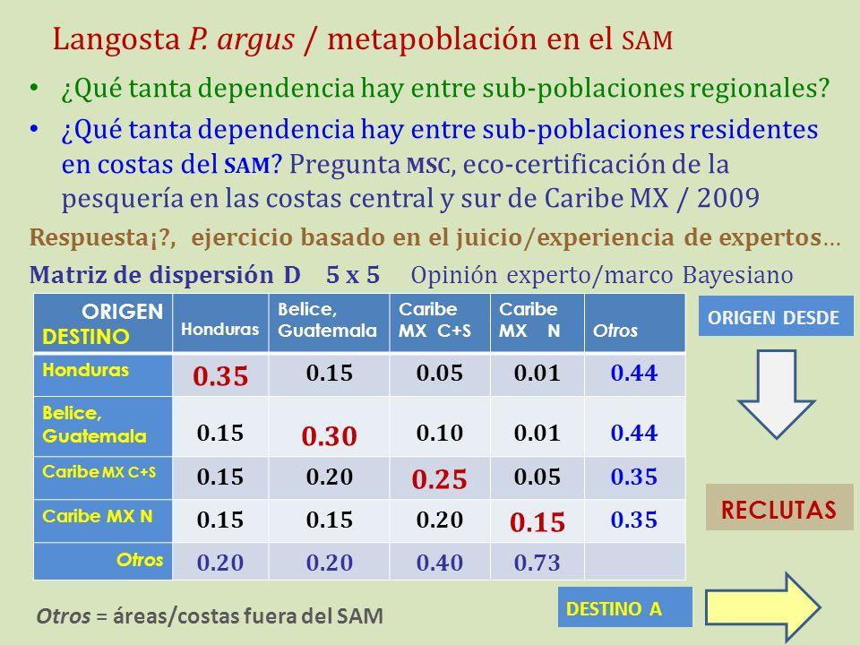 Langosta P. argus / metapoblación en el SAM ¿Qué tanta dependencia hay entre sub-poblaciones regionales? ¿Qué tanta dependencia hay entre sub-poblacio