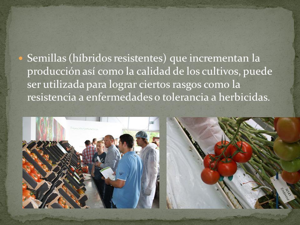 Semillas (híbridos resistentes) que incrementan la producción así como la calidad de los cultivos, puede ser utilizada para lograr ciertos rasgos como