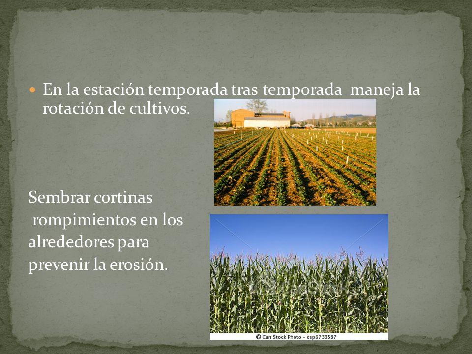 En la estación temporada tras temporada maneja la rotación de cultivos. Sembrar cortinas rompimientos en los alrededores para prevenir la erosión.