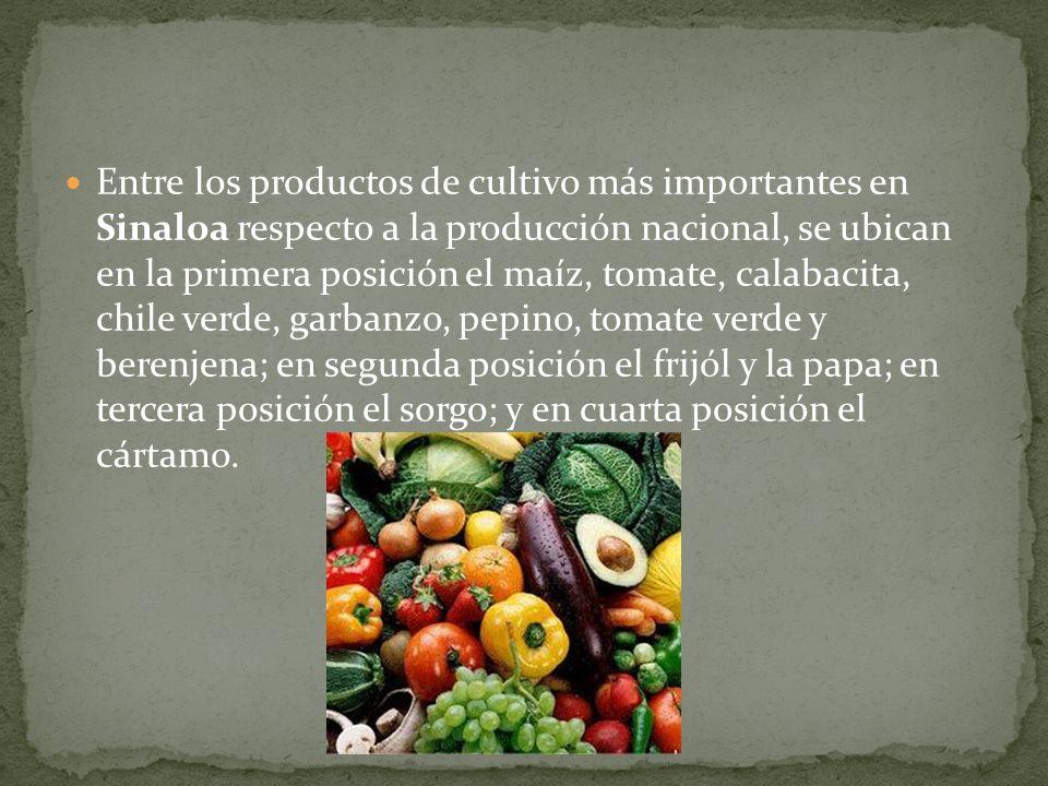 Entre los productos de cultivo más importantes en Sinaloa respecto a la producción nacional, se ubican en la primera posición el maíz, tomate, calabac